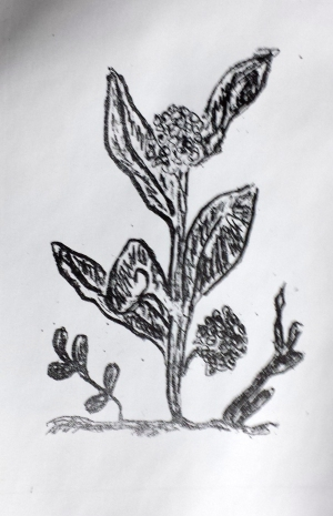 carols litho plant copy