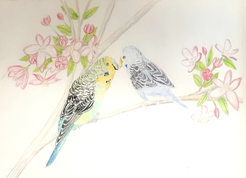 Budgie Parakeets in Cherry Tree cp.jpg