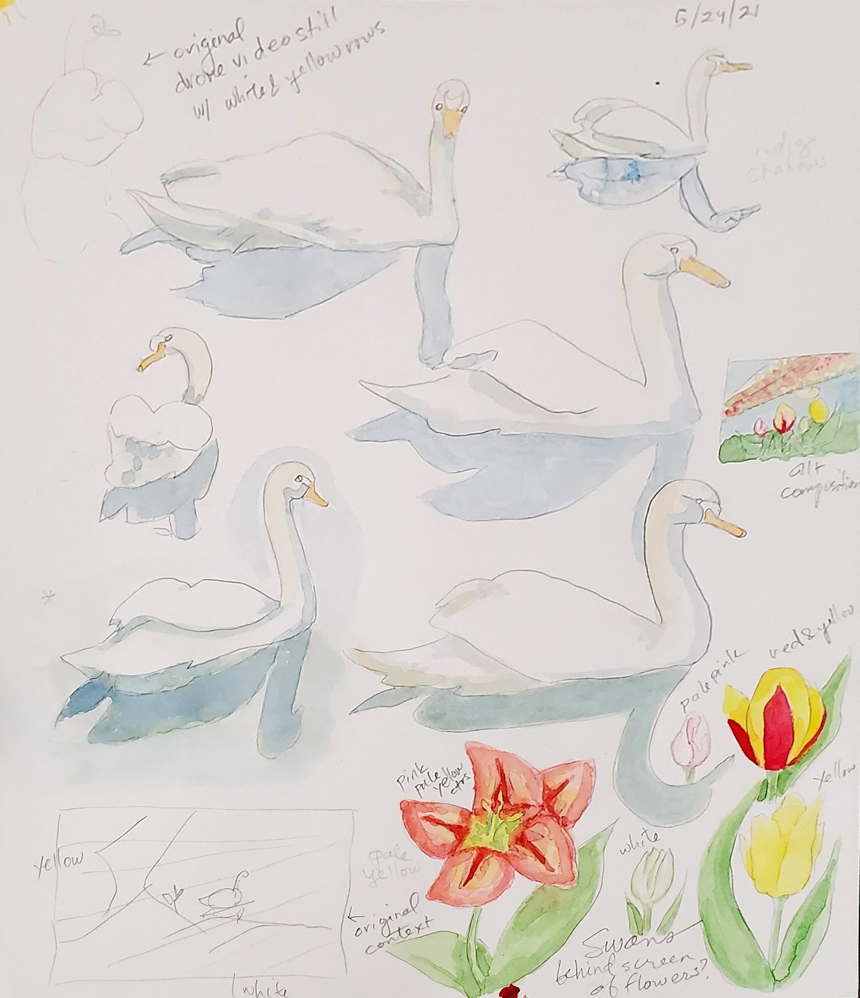 Tulips & Swan Studies Keukenhof